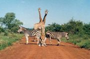 mover_south-africa